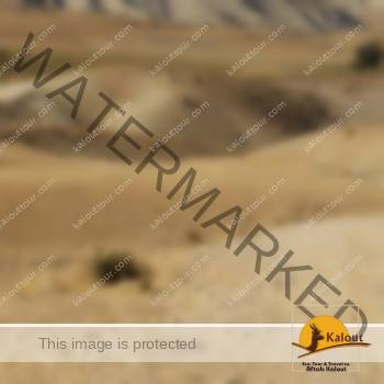 Randonnée à Cheval en Iran